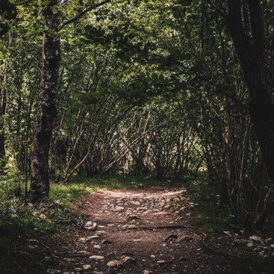bosque-picos-de-europa-1